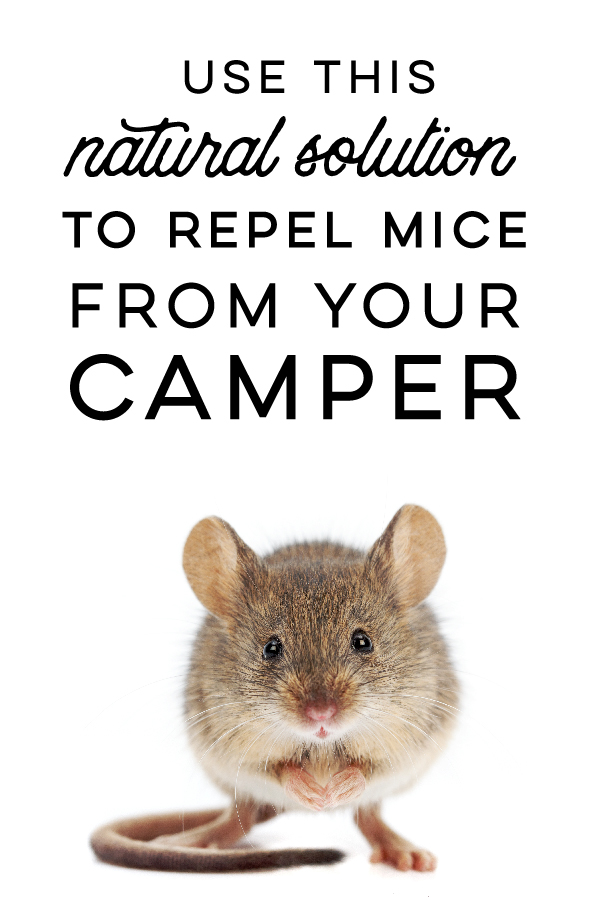 How to naturally repel mice from your camper using Peppermint Oil! This solution doesn't harm or kill the mice but prevents them from entering in the first place! GrandpasGoodEarth.com