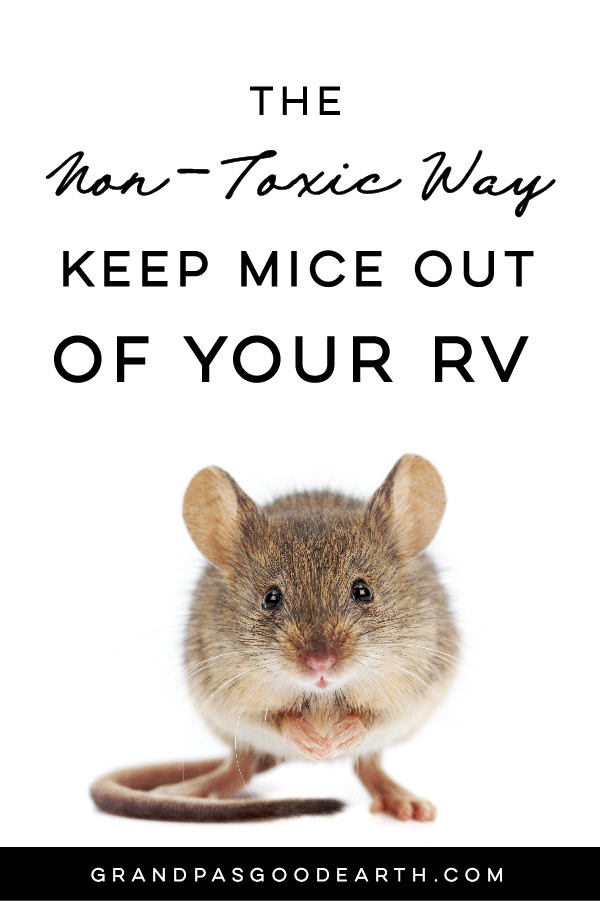 How to naturally repel mice from your home using Peppermint Oil! This solution doesn't harm or kill the mice but prevents them from entering in the first place! GrandpasGoodEarth.com