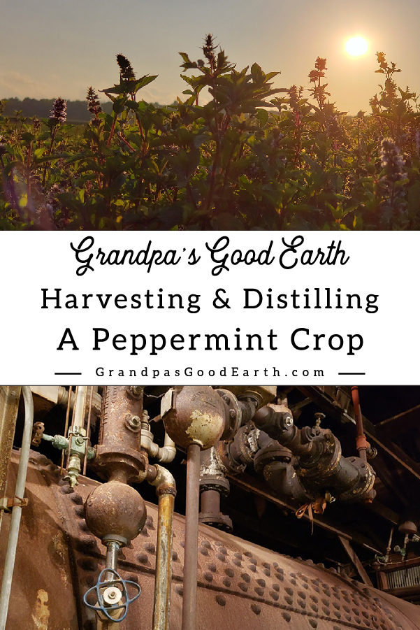 Harvesting and Distilling Peppermint Field and distillery Grandpa's Good Earth